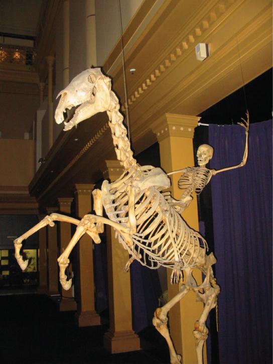 Photo shows a human skeleton riding a bucking horse skeleton.