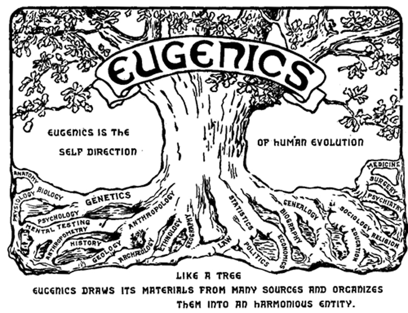 Illustration shows a tree with words such as genetics, statistics, medicine, economics, and genealogy associated with the roots. The word eugenics is emblazoned across the upper trunk. To the side of the tree is the text that reads, Eugenics is the self-direction of human evolution.