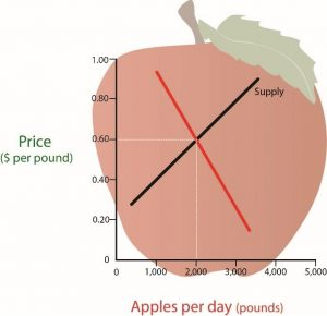 A graph with numbers 0-5000 on the X axis for pounds of apples per day and 0-1.0 for Price per pound on the Y axis. The supply curve shows a diagonal line moving higher from left to right. The demand curve shows a diagonal line moving lower from left to right. These two are combined and the Equilibrium Price revealed at the intersection.