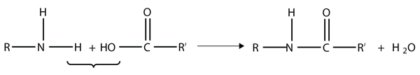 Amide Formation