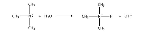 Proton Acceptor