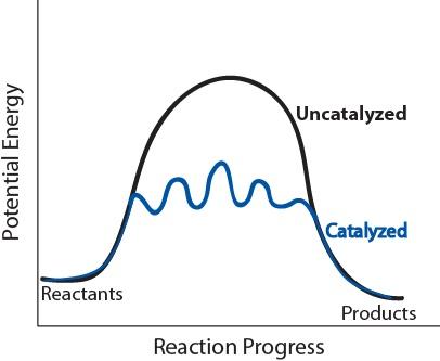 Figure 17.7.2. Potential energy diagram of catalyzed vs uncatalyzed reaction pathway.